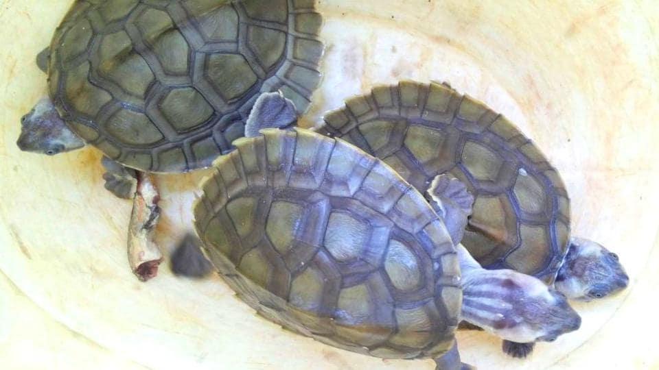 Turtle,Smuggler,Arrest