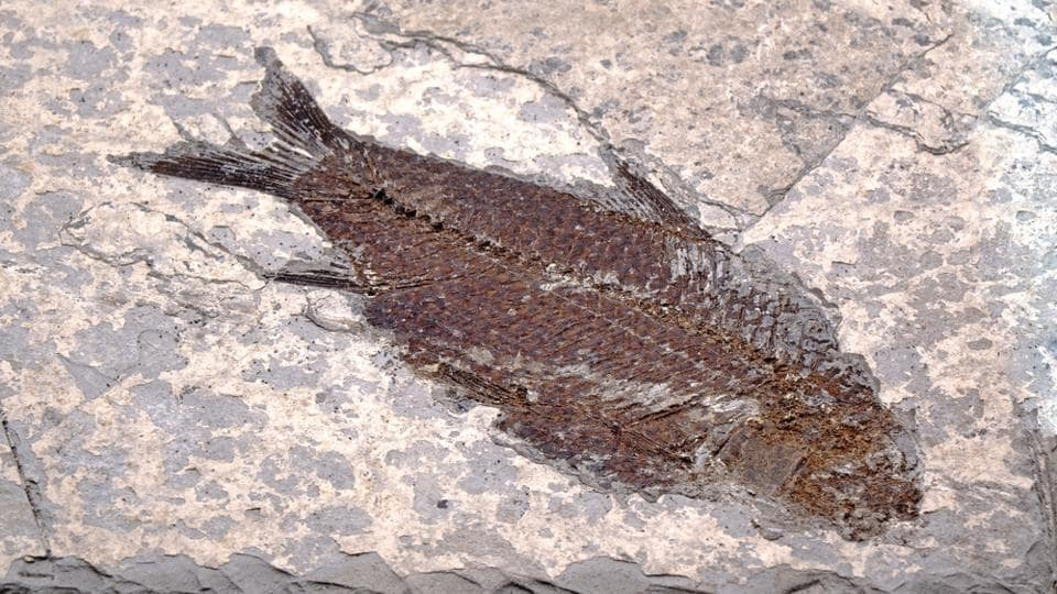 The palaeontology team found a nearly perfect, intact fossil of an ancient fish in Colombia.