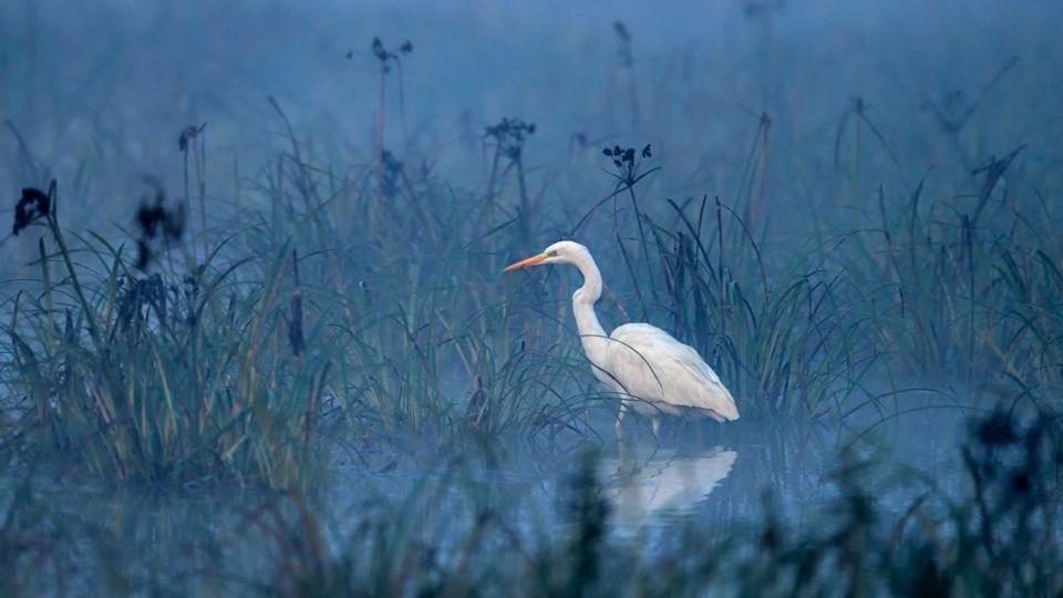 An egret hunting in a small pool at twilight in Keoladeo Ghana National Park of Bharatpur, India. Exhibition curator Laura Williams' theatrical approach is an attempt to simulate the dramatic experience of being inside a forest by exhibiting photographs inside a theatre. (Aditya Singh)