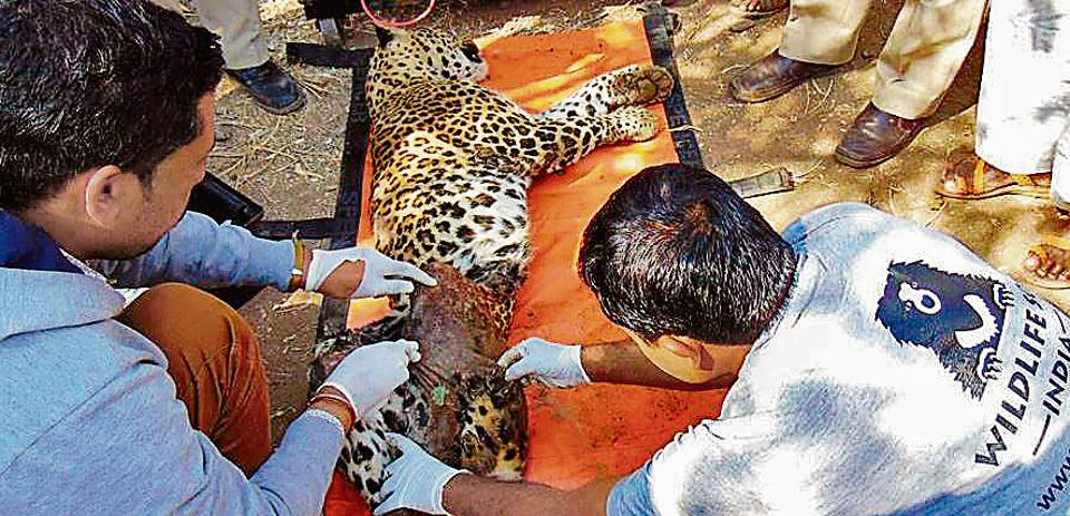 mumbai,environment,wildlife