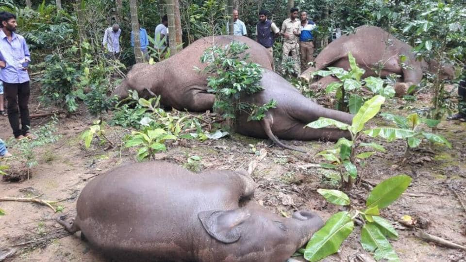 Dozens of elephants, tigers, sloth bears, monkeys and flamingos have been electrocuted in India's farmlands, plantations, around human settlements near forests, as they come in contact with poorly maintained power lines and electric wires.