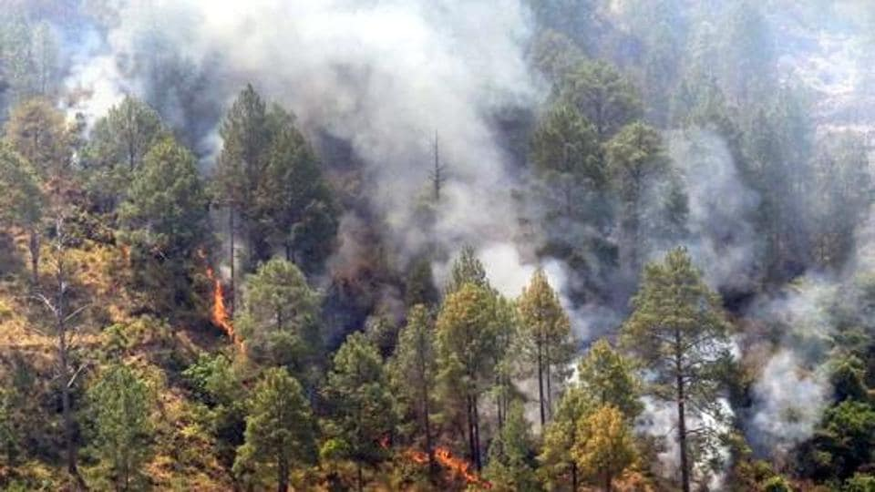 firefighters,Forest dept,₹17 lakh