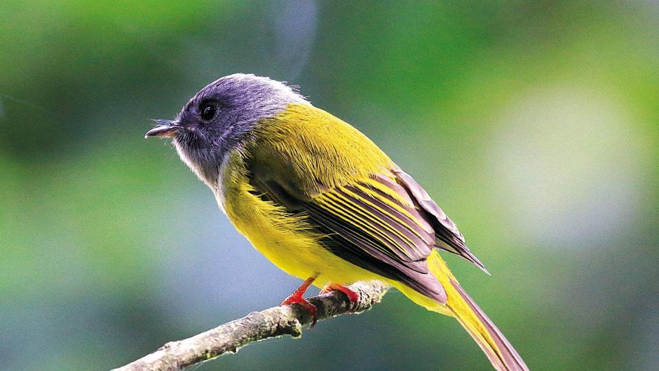 Mumbai news,Mumbai BirdRaces,Birds sighted