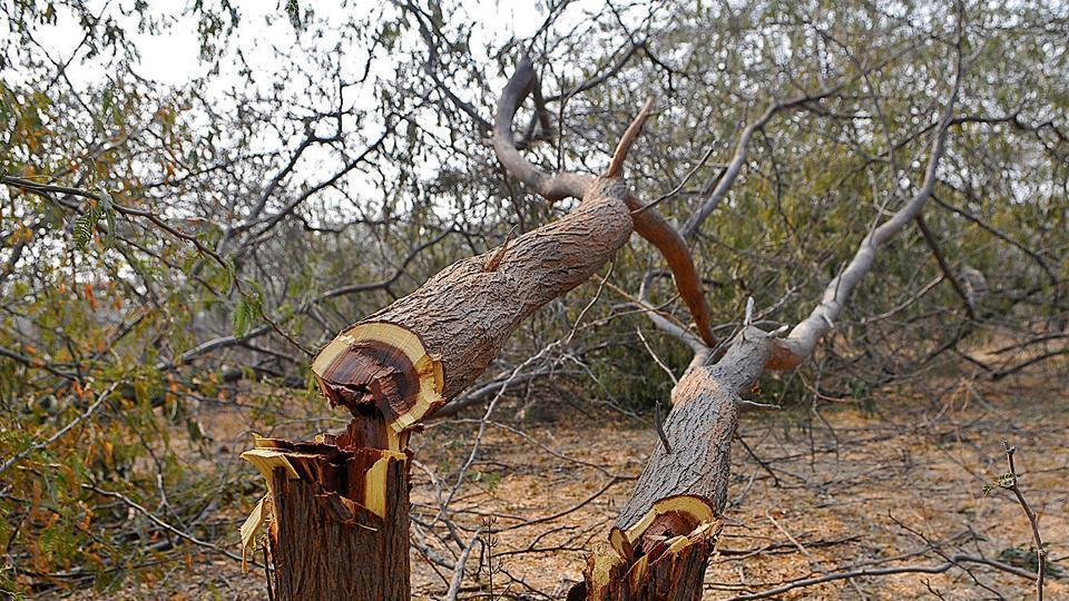 The court has asked TMCto consider the opinion of experts on the cutting down of trees.