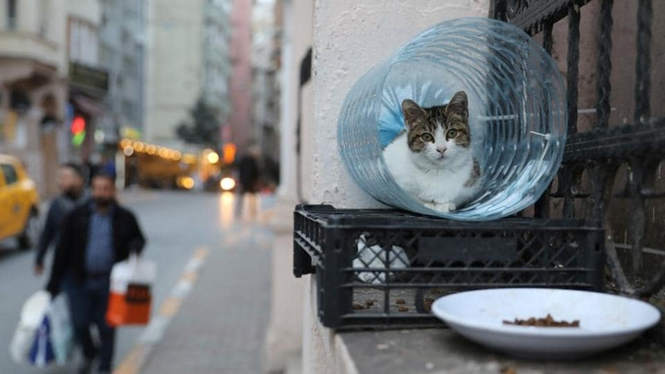 A cat sits in a shelter made from a cut out water bottle. In the hip district of Cihangir, where the streets are lined with such little cat shelters, it is not uncommon for felines to take the last available seats in crowded bars, leaving adoring customers to stand by, petting them, as they awake from yet another nap. (Goran Tomasevic / REUTERS)