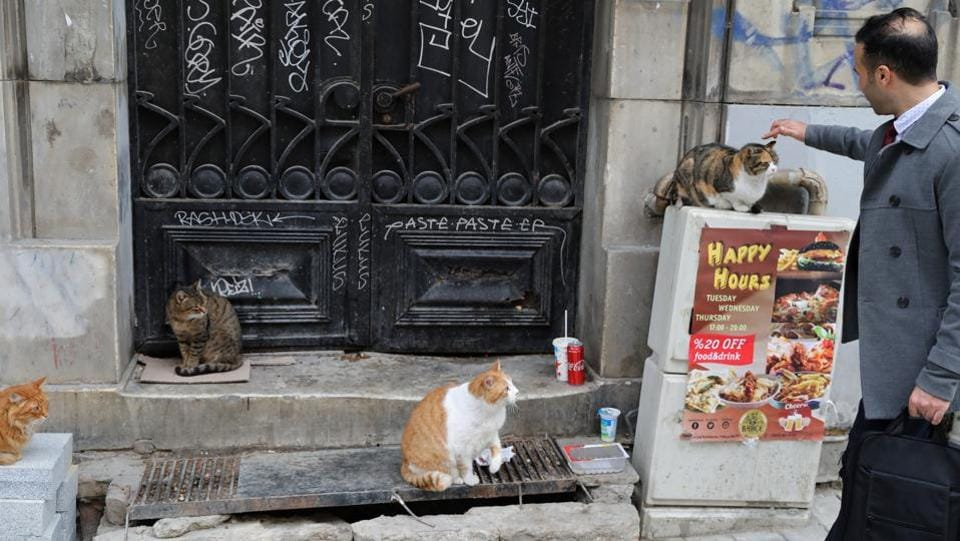 Shop owners and locals often know their neighbourhood cats by name and will tell tales about them, as if chatting about a friend. (Goran Tomasevic / REUTERS)