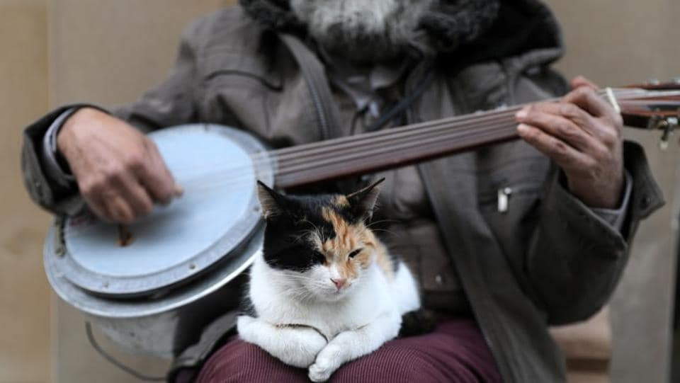 "A cat sits on the lap of a street singer. ""Money is not an issue to some people when it comes to cats,"" said Ozan, a pet shop employee. ""They take in cats with broken legs, blind ones or ones with stomach problems and bring them to the clinic. When they see that they are healed, they let them live on the street again."" (Goran Tomasevic / REUTERS)"