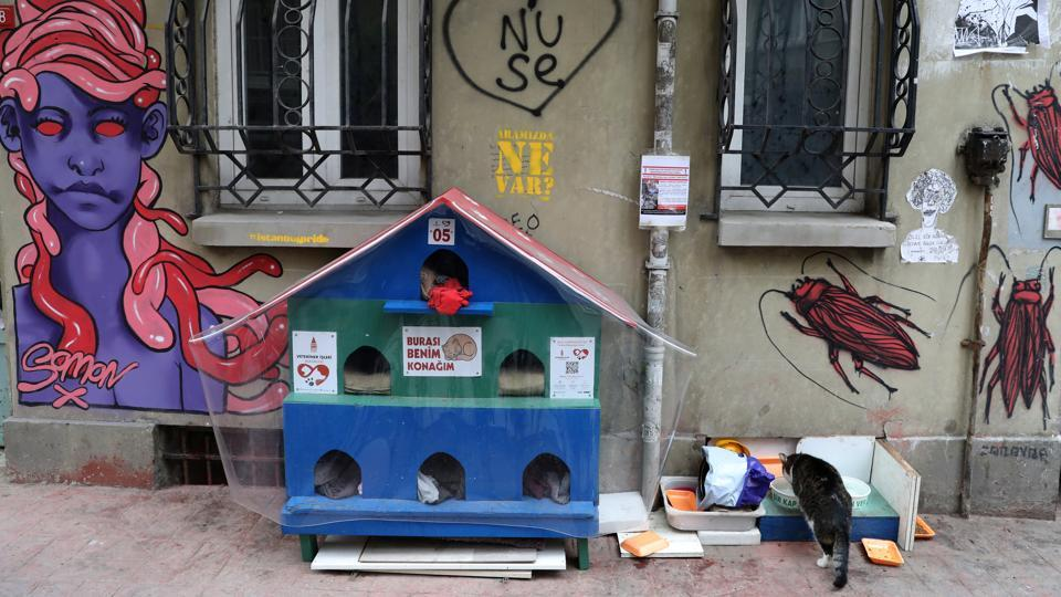 A cat eats next to a cat shelter in Istanbul. Some cat-loving Istanbulites buy little feline houses to keep their furry neighbours warm on cold nights, taking advantage of the discount on cat supplies at pet stores during the winter months. Some even bring cats home on the coldest nights. (Goran Tomasevic / REUTERS)