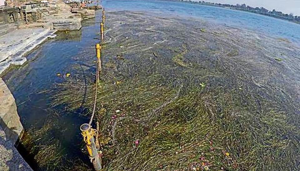 The rotting vegetation is also killing the fish in the river, putting the hundreds of fishermen in crisis.