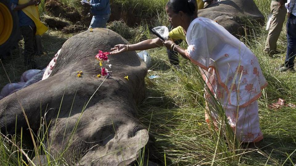 Speeding train mows down five wild jumbos in Assam