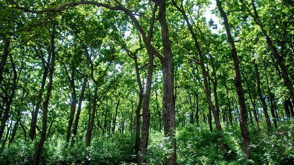 The latest report of 2017 has shown a meagre increase of 165 sq km in very dense forest and 636 sq km in other forest categories, while the moderate dense forest diminished with a difference of 778 sq km, leaving the total cover in state to 24,295 sq km.
