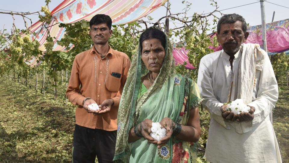 Mandodari (centre) and Rama Shelke's (right) crop of grapes were damaged in the sudden downpour of hailstones in Jalna,  on February 11, 2018.
