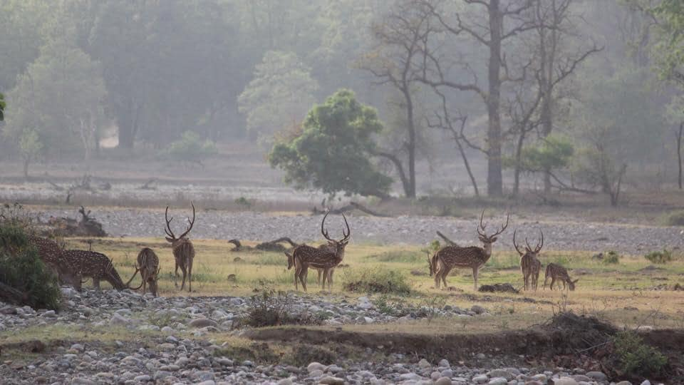 A total of 177 wildlife crime cases related to the deer family were registered in the state between 2007 and 2015, according to the RTI.