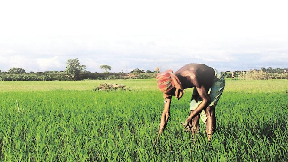 The data shows that 71% of Scheduled Caste farmers are what the census refers to as 'agricultural labourers' — that is, they work for wages on others' land.