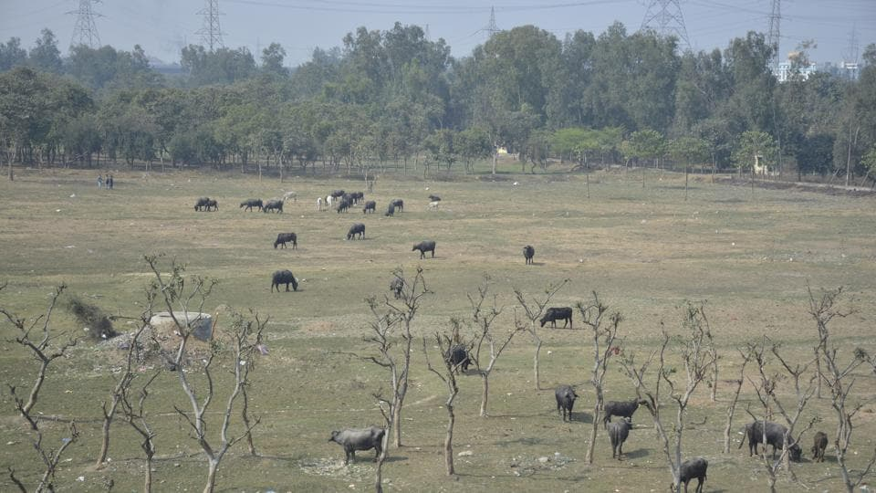 Environmentalists blame rapid urbanisation in the city for Ghaziabad's vanishing green cover.