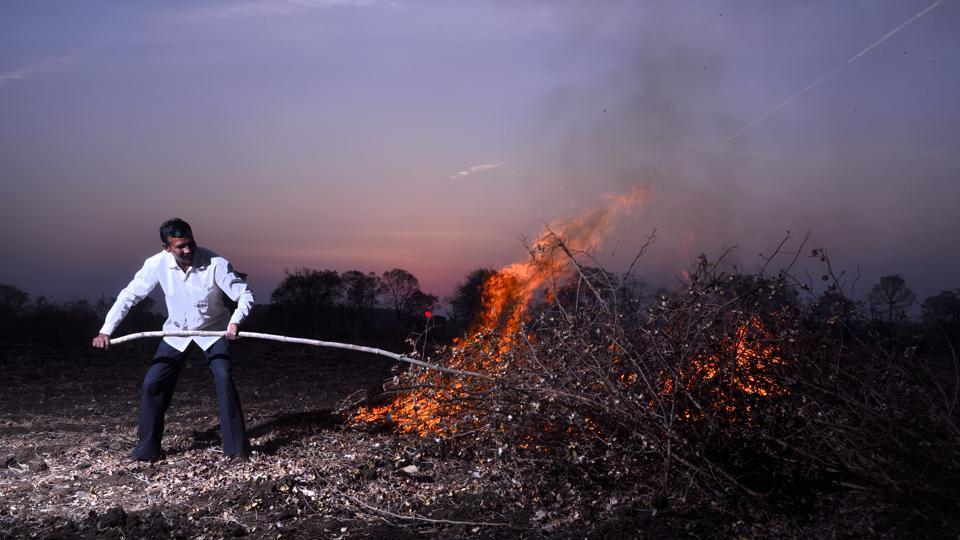 Ramdas Turi from Yavatmal district sets ablaze his pink bollworm infested cotton crop. Between 2001 and 2017, 16,912 farmers committed suicide in Vidarbha. So far, only two cases in January have been found eligible for the compensation of Rs1 lakh offered by the government for farmers' suicides. The remaining are under various stages of inquiry by tehsildar's offices across 11 districts. (Anshuman Poyrekar / HT Photo)