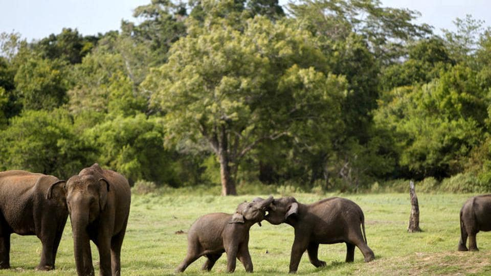 Jharkhand sees forest loss in wildlife dominated districts