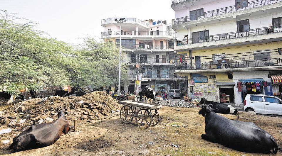 building bylaws delhi