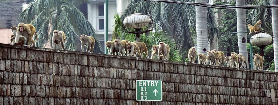 leadership,start-ups,monkeys
