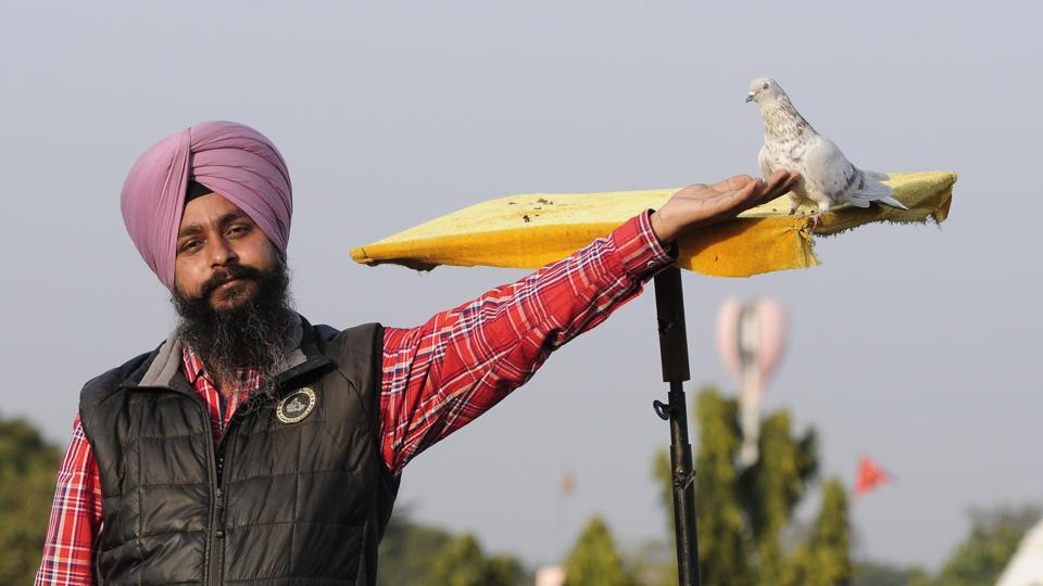 Pigeon enthusiast JagJaspreet Singh loves them for their ability to respond quickly to training.  (Keshav Singh/HT)