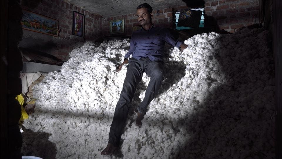 Bayaskar has some of the subgrade cotton picked from his field stacked in a room outside his home. His loss this year from cotton and soyabean is in the range of ₹1.5 lakh to ₹2 lakh. (Anshuman Poyrekar / HT Photo)