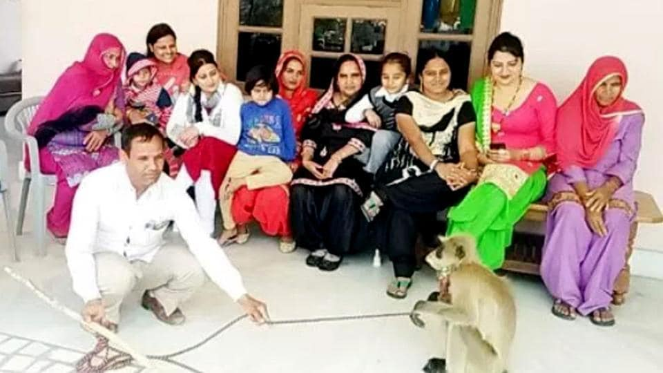 Haryana news,langur,Tohana town