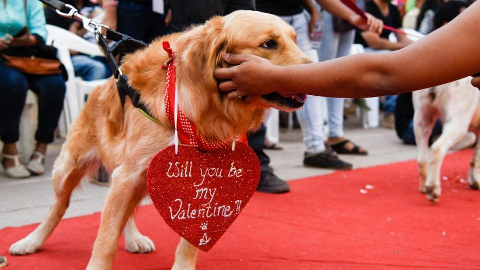 Many of the owners had dressed up their pets and had put up creative and catchy slogans to match their costumes. (Sanket Wankhade/HT PHOTO)