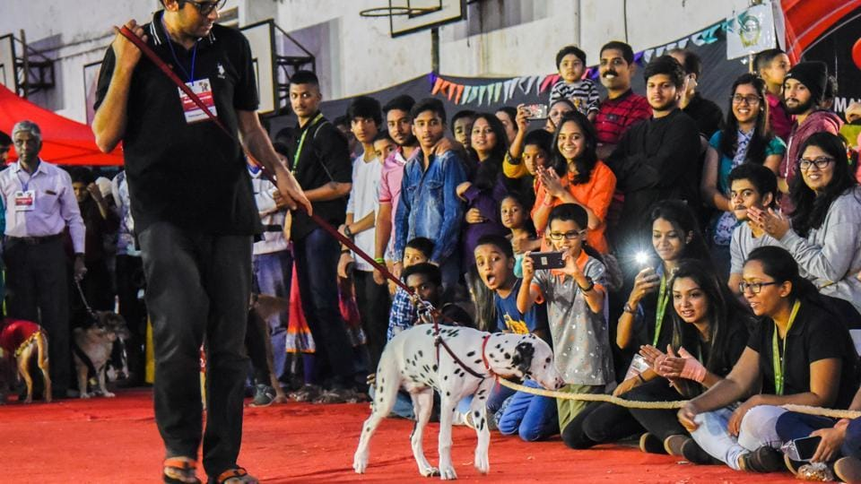 The canines also took part in a ramp walk with their owners. (Sanket Wankhade/HT PHOTO)