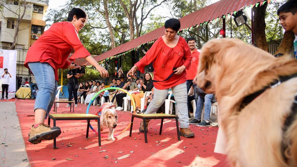The owners had a blast helping their dogs reach the end of the course, fighting their way through the 'obstacles' as a team. (Sanket Wankhade/HT PHOTO)