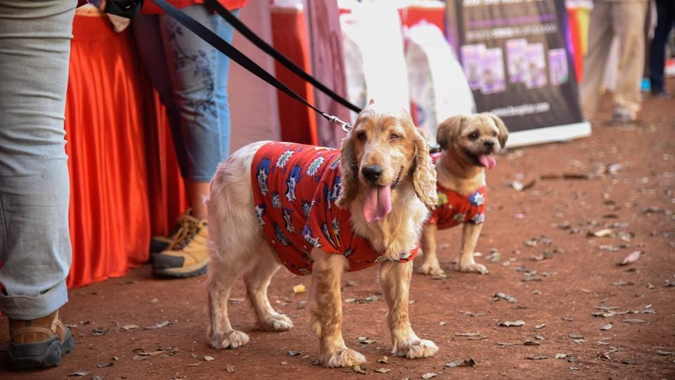 The dogs wore shirts and other accessories and were enthusiastic to hit the ramp. (Sanket Wankhade/HT PHOTO)