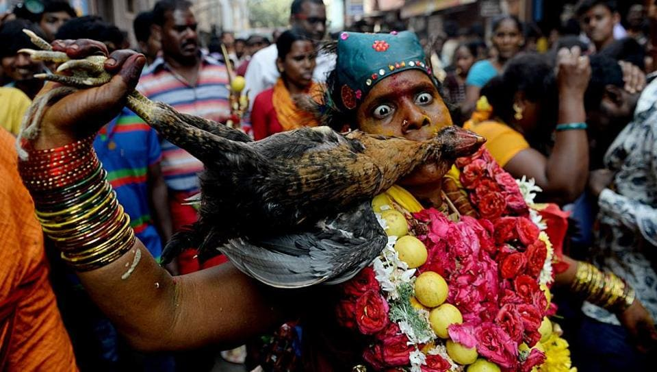 A devotee dressed as the goddess Kali dances during a ritual while bitting a dead chicken at a procession to mark Shivratri in Chennai on February 15. (Arun Sankar / AFP)