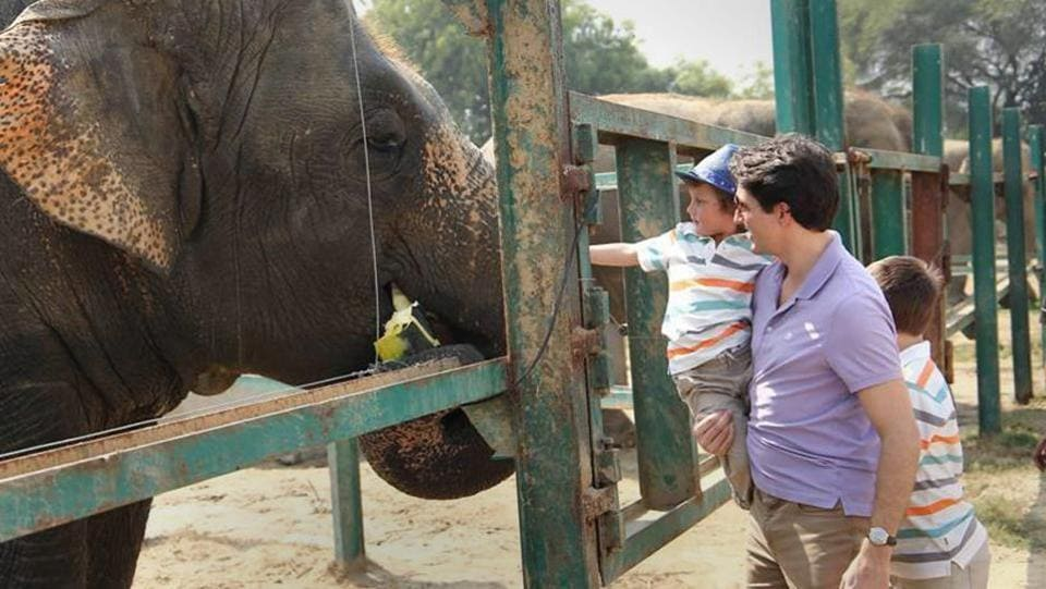 PM Justin Trudeau with his son Hadrien, 3, feeds an elephant during a tour of the elephant sanctuary in Mathura on Sunday. Trudeau arrived in India on Saturday for a week-long visit aimed at enhancing business ties between the two countries. (PTI)