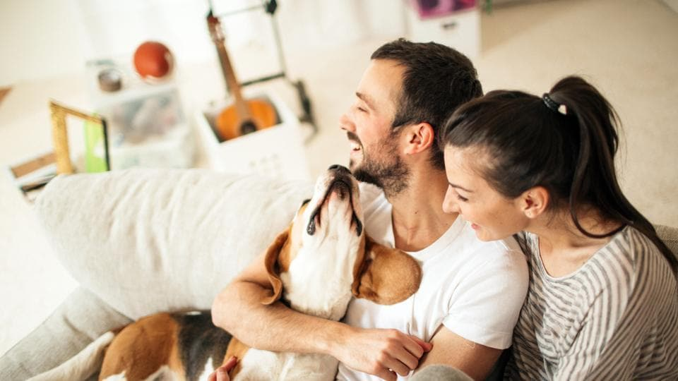 Pet Therapy,How pets can help your realationship,Sex and relationship