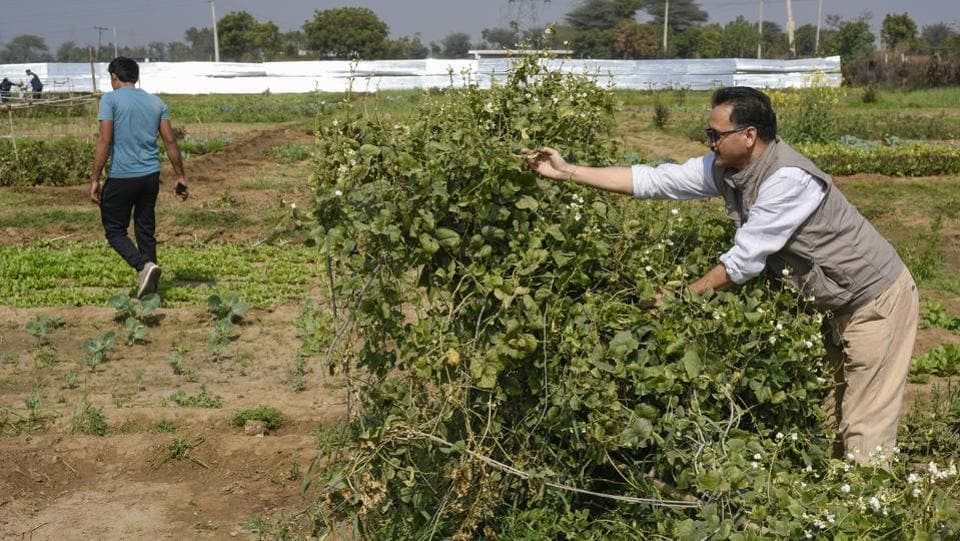 The'agri-enterprises' believe they are creating a sustainable local food and agricultural system that benefits the farmers, urban communities, and the environment.  These firms help residents set up organic farms by subleasing  farmland it takes on lease from farmers.  (Burhaan Kinu / HT Photo)