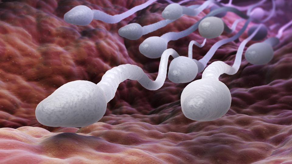 Sperm,Fast Swimmers,Tubulins