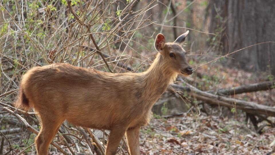 Uttarakhand news,animals die,Punjab