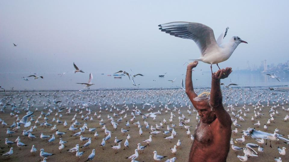 A man feeds seagulls at Marine Drive, Mumbai on February 16. (Supreet Sapkal / HT Photo)