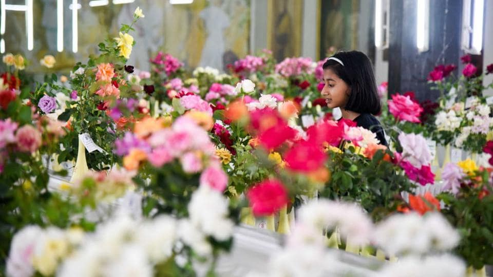 A little girl examines the roses exhibited at the 101 Rose show by The Rose Society of Pune at Tilak Smarak Mandir. (Sanket Wankhade/HT PHOTO)