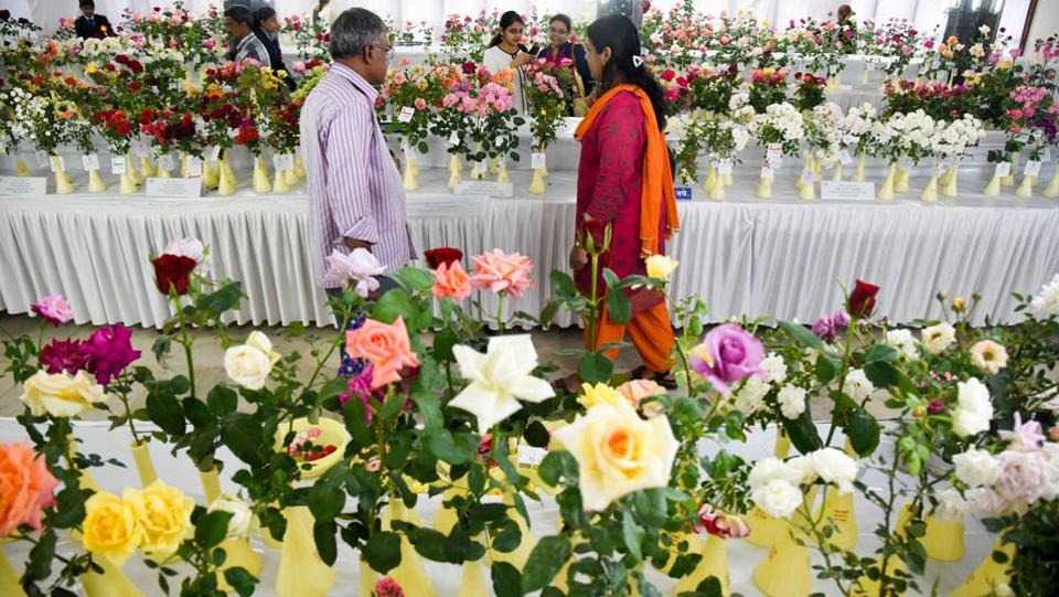 Wide variety of roses exhibited at the 101 Rose show by The Rose Society of Pune at Tilak Smarak Mandir on Tilak road on February 17. (Sanket Wankhade/HT PHOTO)
