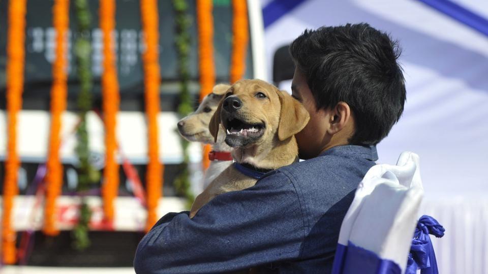 Noida news,Noida animals,Noida animal lovers