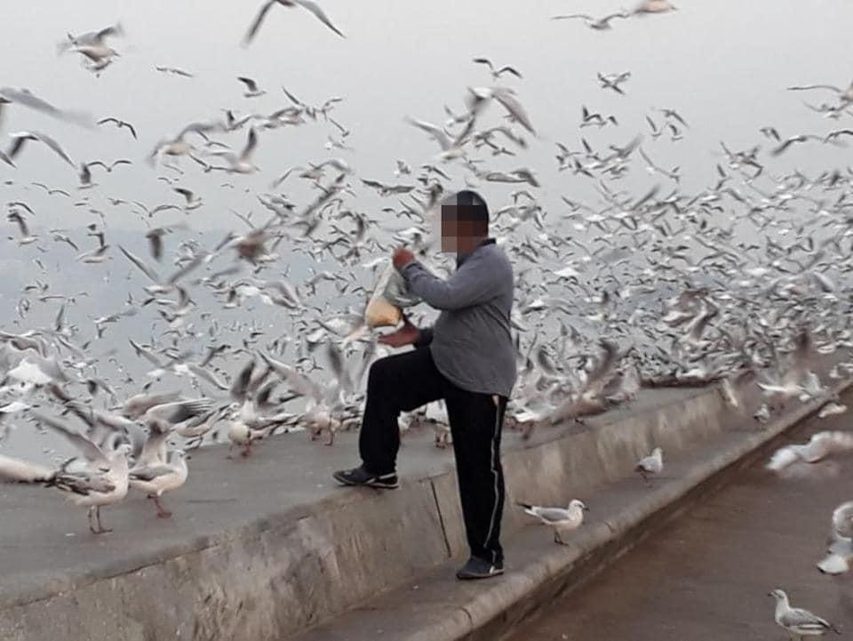 A man feeds the seagulls at Marine Drive.