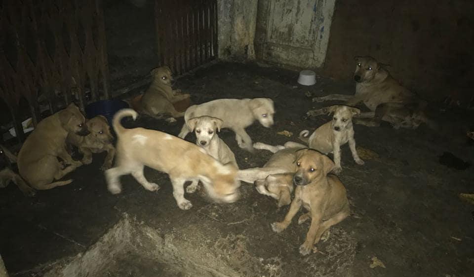 Mumbai,Mumbai news,puppies