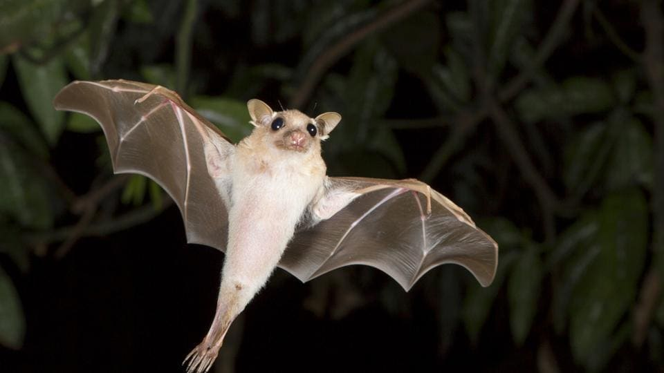 Just like bats, expert echolocators instinctively increase the intensity (or loudness) of their clicks, and click more frequently when an object is off to the side or behind them.