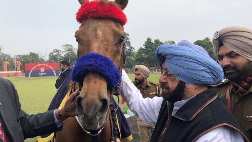 Punjab CM meets Sunny Kid, a horse gifted to him by former deputy prime minister of Pakistan, Pervaiz Elahi