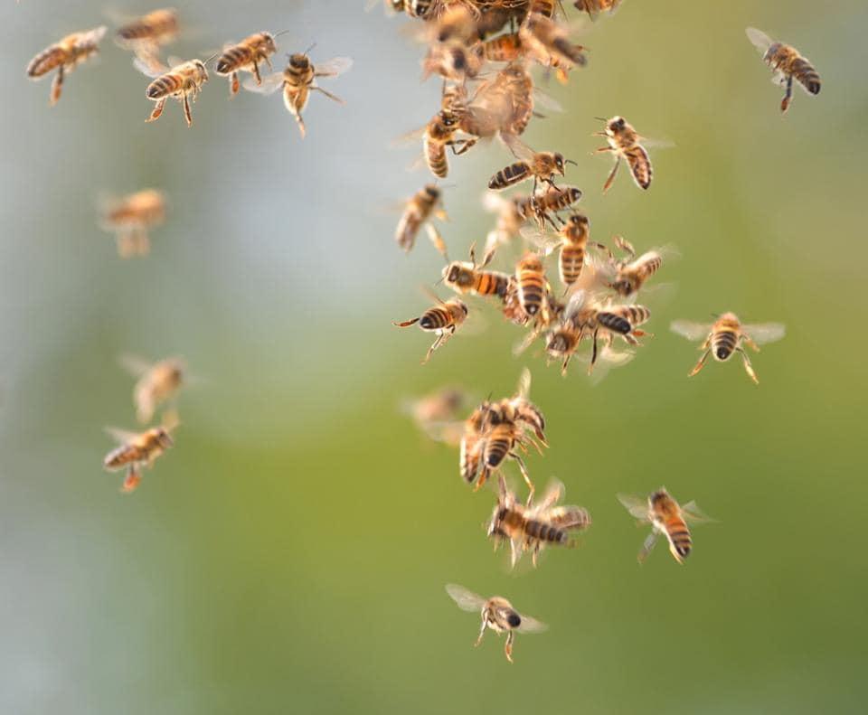 Bee attack,Tamil Nadu,Adhi Karuvanrayar temple