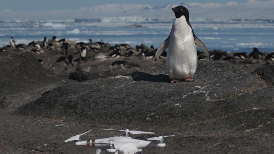 Penguins,Antarctic islands,Adelie penguins