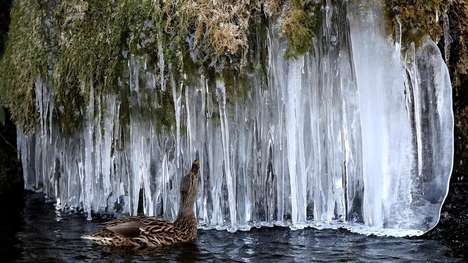 A duck appreciates icicles forming at a pond in Bern, Switzerland. (Stefan Wermuth / REUTERS)