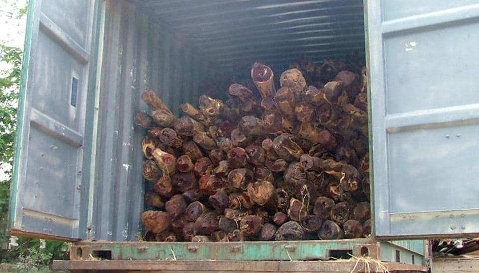 Laying a trap at Kalamboli junction, police have seized a consignment of red sandalwood.