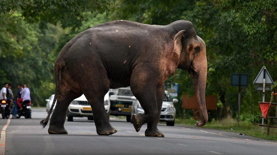 Representational picture. The simultaneous presence of wild elephants and a tiger has paralysed normal life in the area.