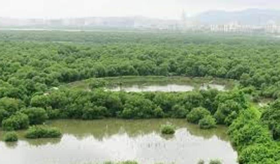 The destruction of mangrove forests across the state and construction within 50m of mangrove areas was banned by the Bombay high court in 2005.
